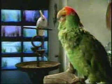 Bud light parrots wassap commercial pet love pinterest funny bud light parrots wassap commercial aloadofball Image collections