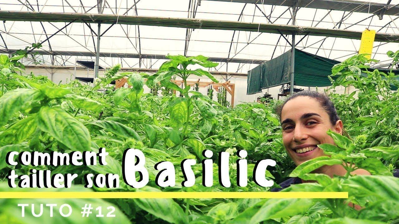 Comment Planter Du Basilic Épinglé sur jardin