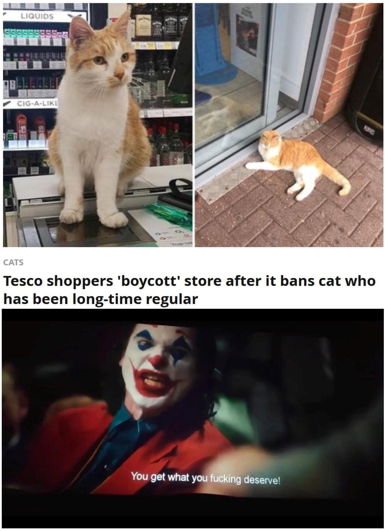 Memes How Dare You Fantastic Joker Meme Funny Animal Memes Funny Relatable Memes