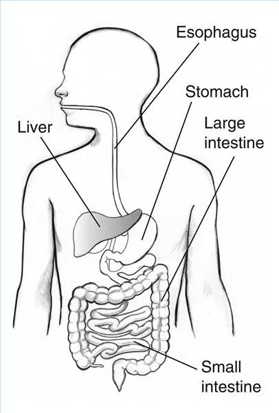 Digestive System Blank Diagram for Kids | 6th grade