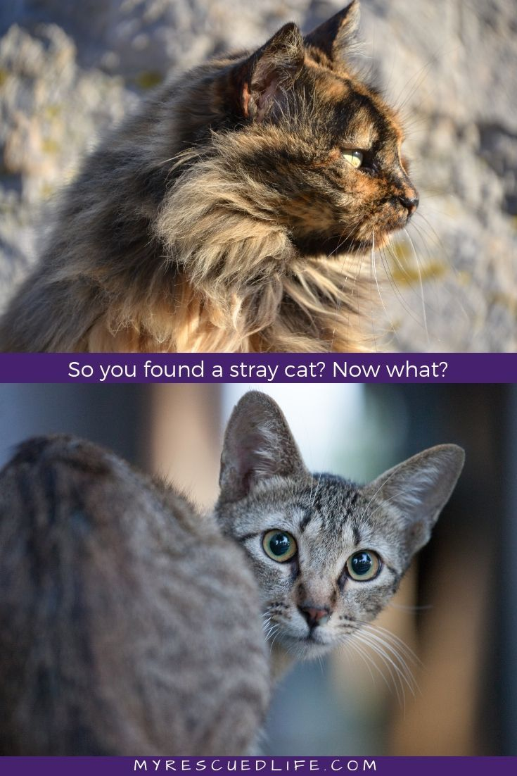 So, you found a stray cat. Now what? How do you tell if a