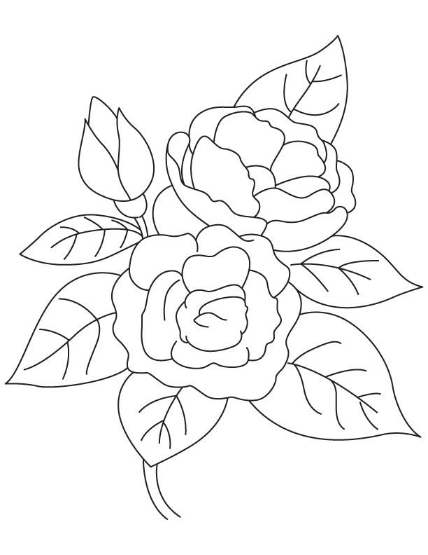 Growing Camellia Coloring Page Pintura Pano De Prato Pinturas Pano