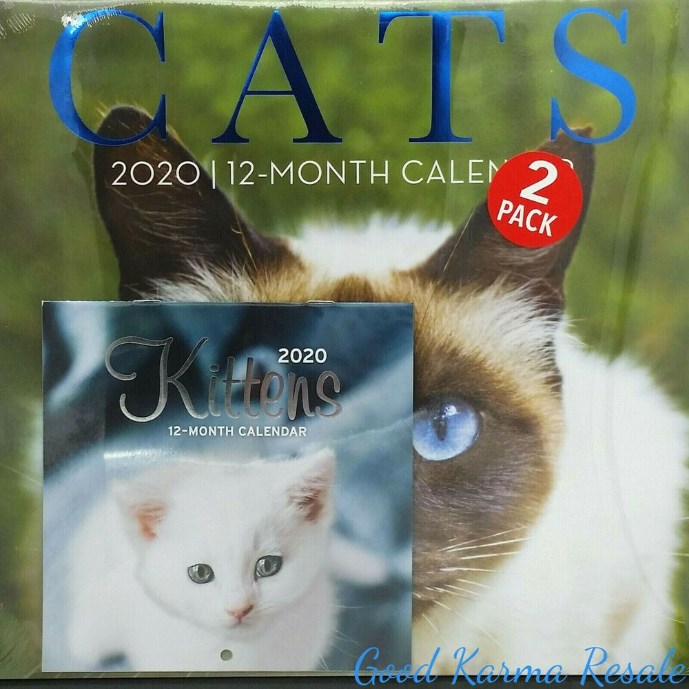 For The Love Kittens Plato Mini Wall Calendar In 2020 Kittens Wall Calendar Cats And Kittens