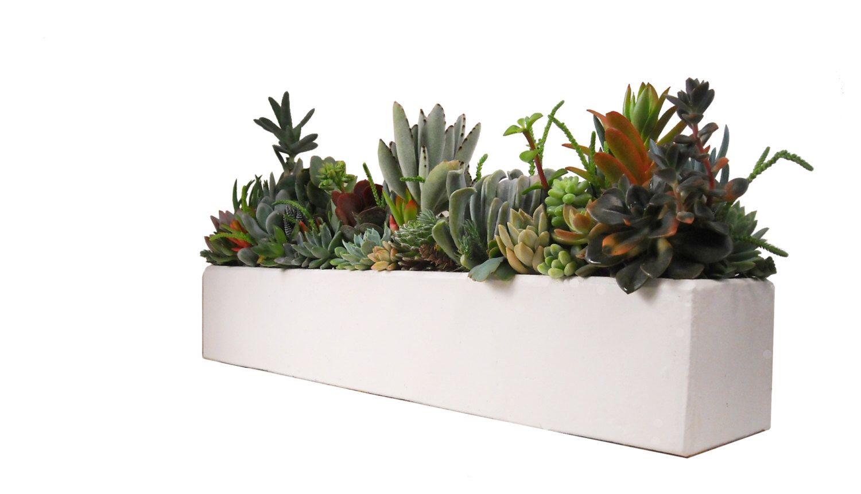 Succulent Concrete Centerpiece Arrangement 24 Quot Large White