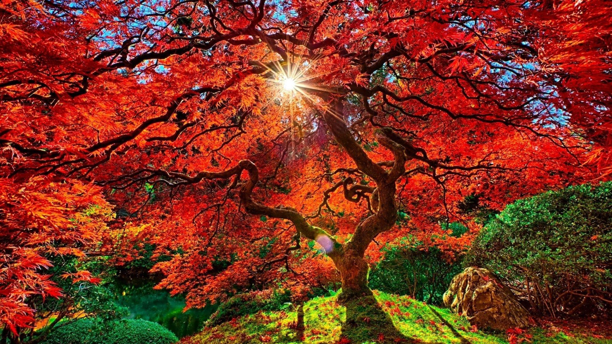 Construction humaine japanese garden japon arbre automne rayon de soleil fond d 39 cran arbres - Arbre du japon ...