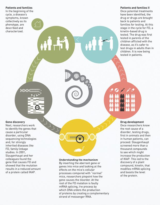 cycle of discovery. Mass General Hospital infographic | Medical ...