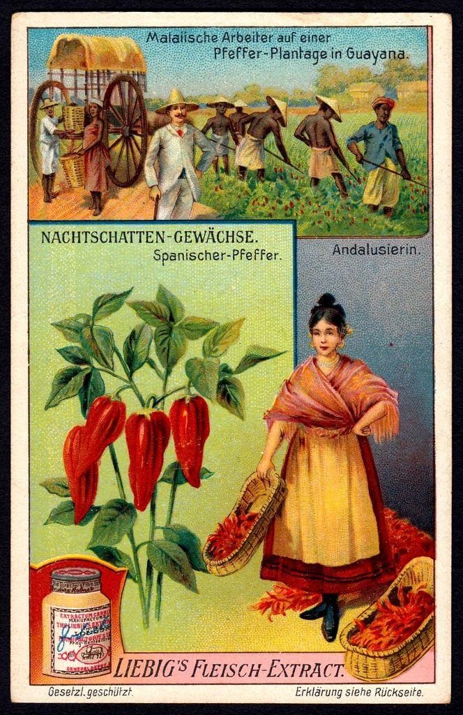 Liebig Tradecard S976 Spanish Pepper Plant Pepper