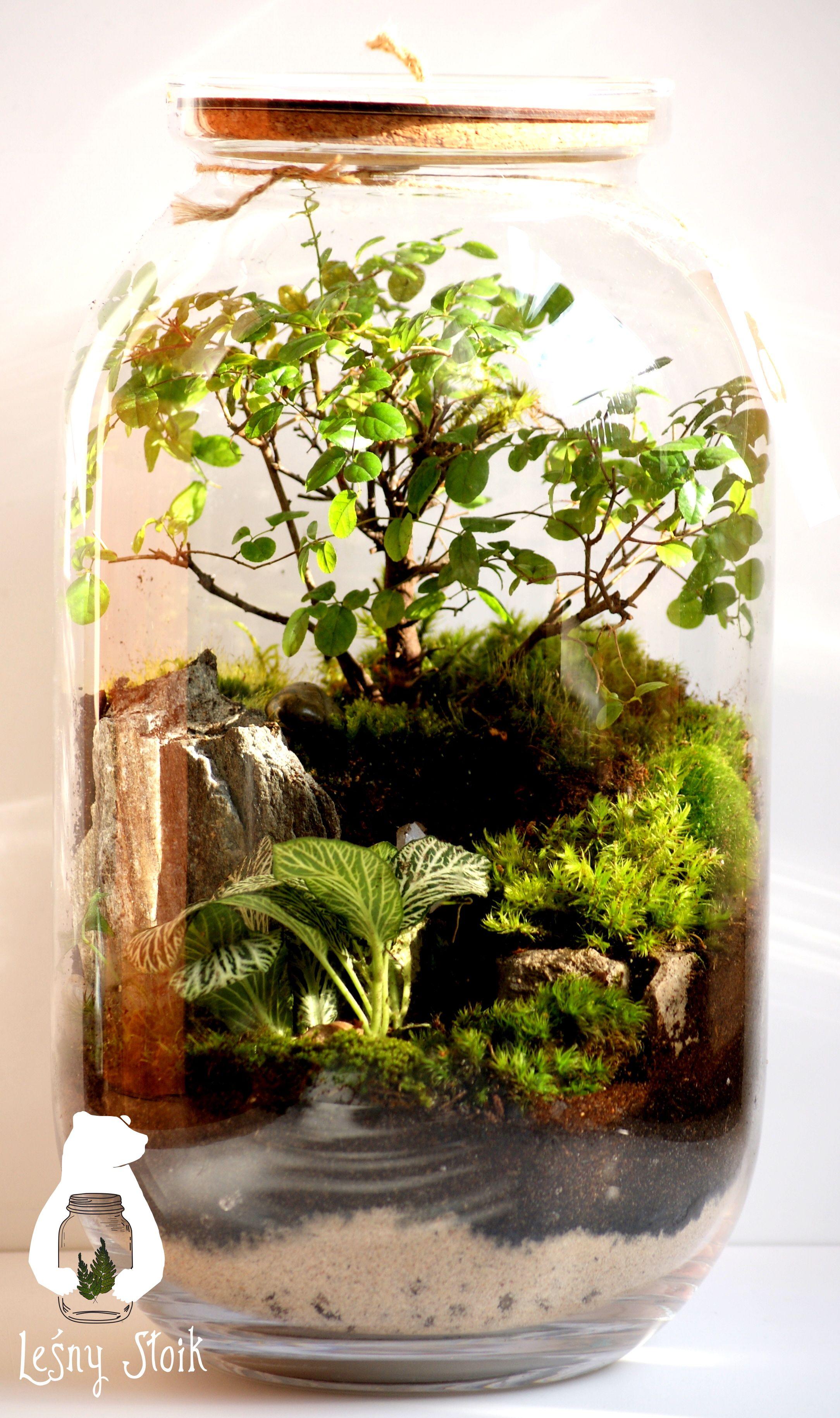 Lesny Sloik Firma Z Katowic Ktora Tworzy Nadzwyczajne Mikroklimaty Na Zdjeciu Znajduje Sie Autorska Zastrzezona Ko Plant In Glass Terrarium Garden Terrarium