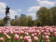 Boston Common (Boston Public Garden) #Boston #Massachusetts #jsiglobal