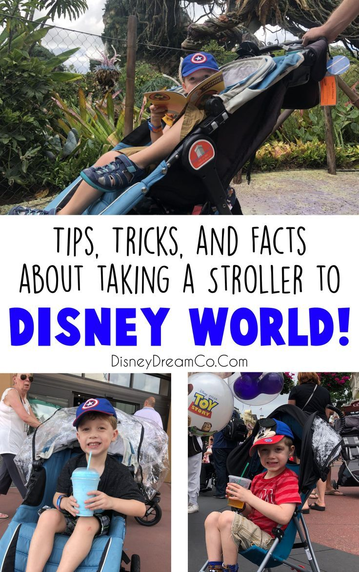 What are the rules about taking a stroller to Disney World