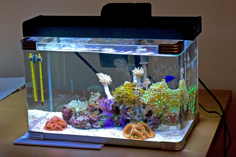 Image Result For 5 Gallon Nano Reef Saltwater Aquarium Reef Tank Saltwater Aquarium Setup