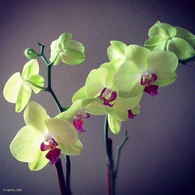 meet növények)