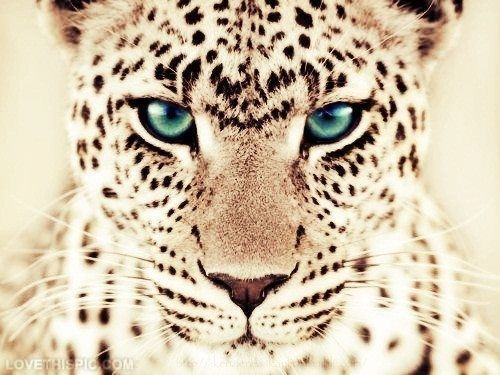 Leopard Photography Animals Eyes Animal Leopard Animal Pictures