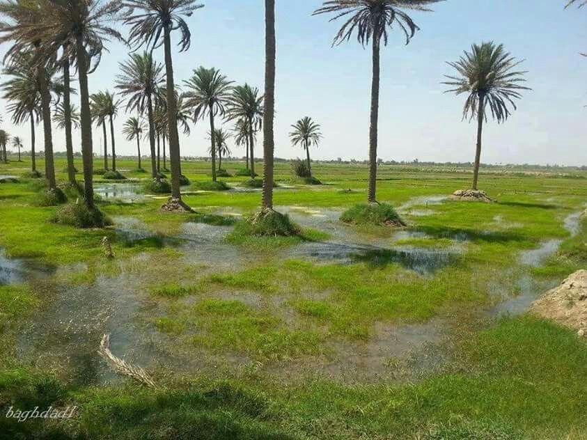 عنبر الشاميه Baghdad Iraq Baghdad History Events