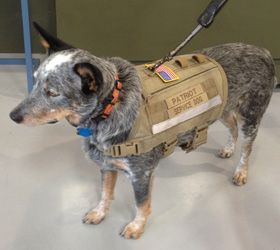 Forcek9 Com Molle Vests Gear For Elite Canines Here S A Great