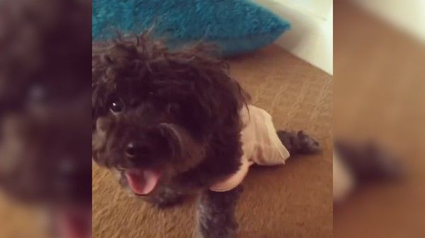 Puppy Mill Dog Loves Her New Life Dog Love Dogs Puppy Mills