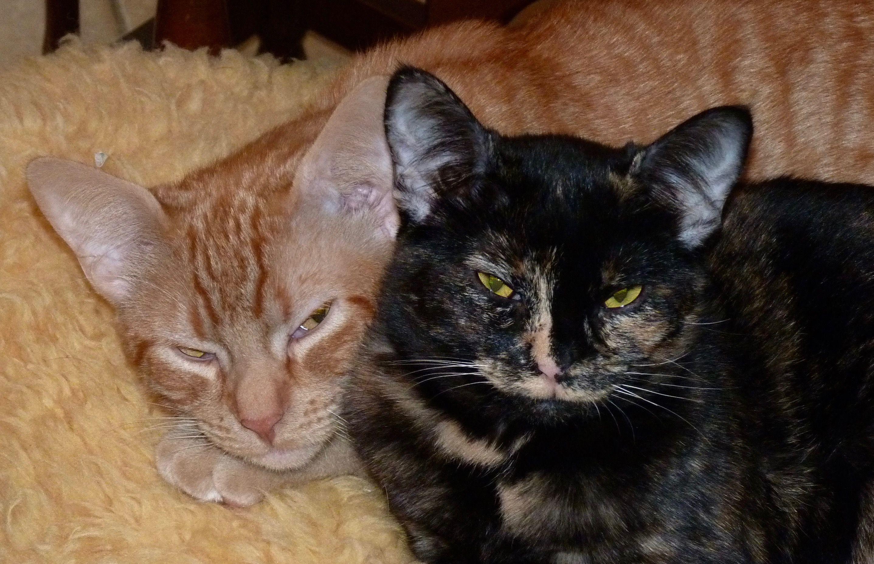 #kittens #eggsandbacon #cats #tired #drowsy #neocurio #artatak