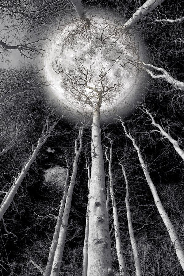 The Moon And Tree Of Life
