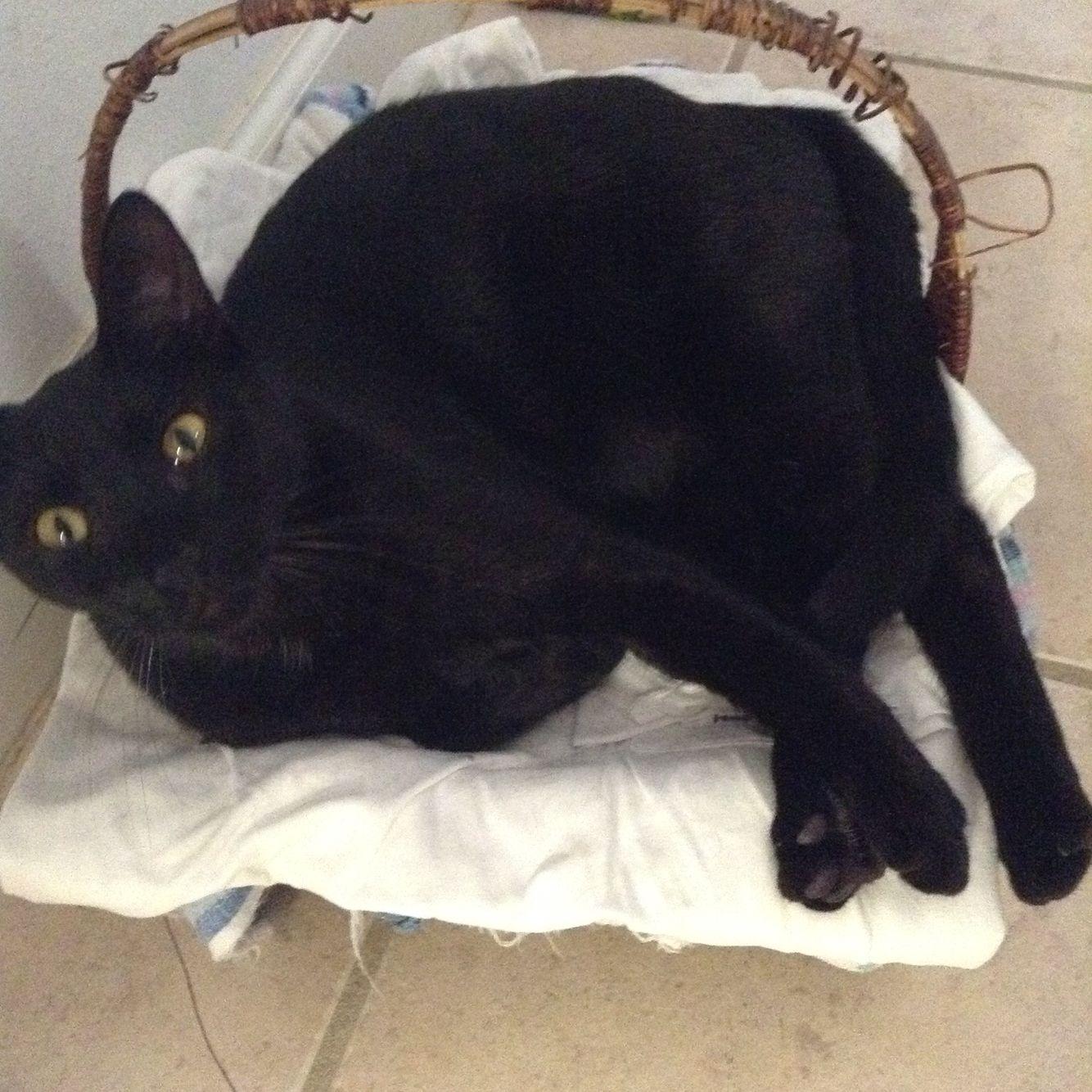 Blackie in a basket
