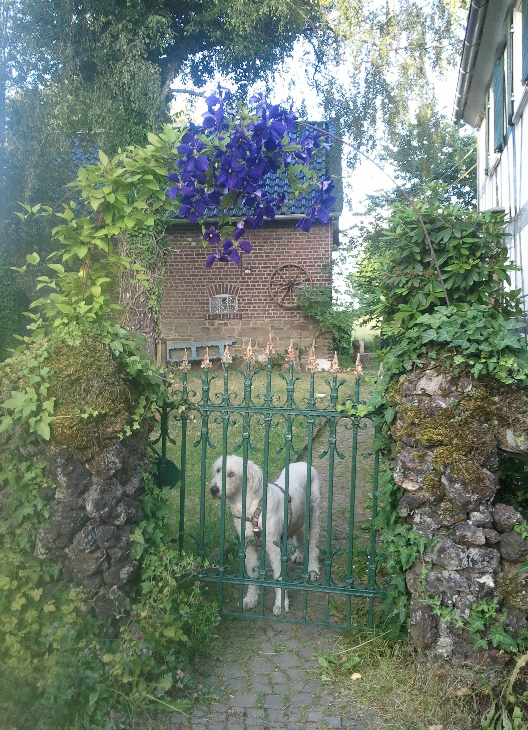 Eingang durch das antike Gartentor zu unserem Garten und ...