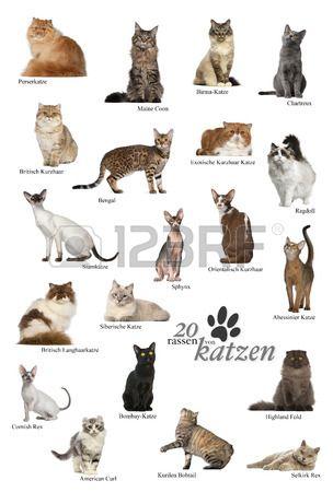 Cat Breeds Poster In German Cat Breeds Types Of Cats Breeds Different Breeds Of Cats