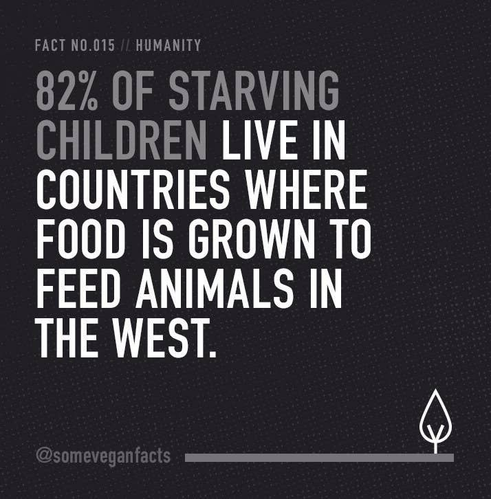 15 Facts That Will Make You Consider Going Vegan