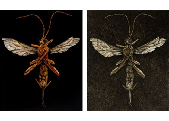 Nicholas Blowers has been in Tasmania for 10 years and his paintings have gone from forests and fallen trees to the forest floor and now insects...