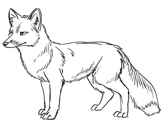 Fox Outline Line Drawing Painting Kindergarten Worksheet ...