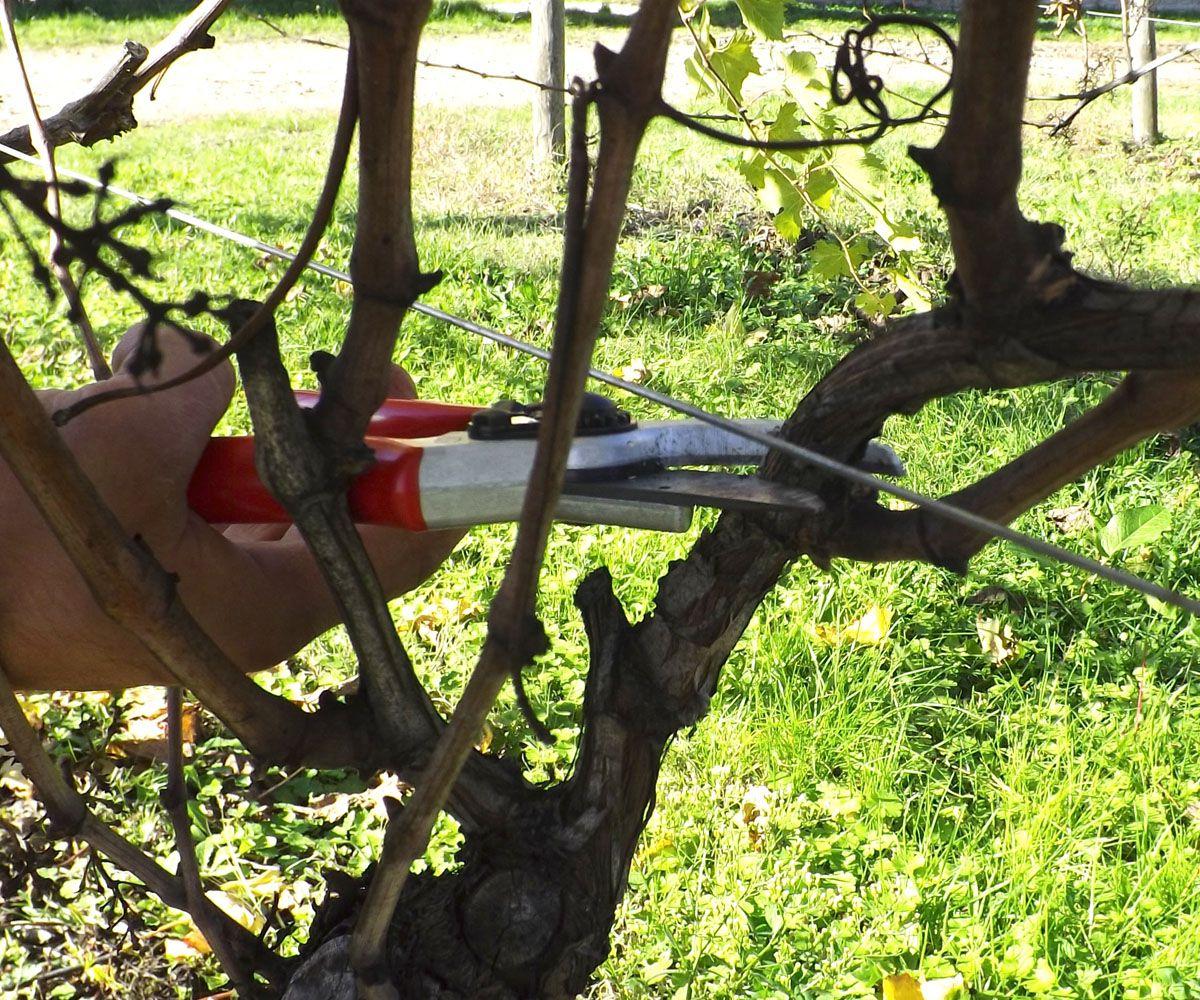 Foto Di Alberi Da Frutto calendario per la potatura degli alberi da frutto | alberi