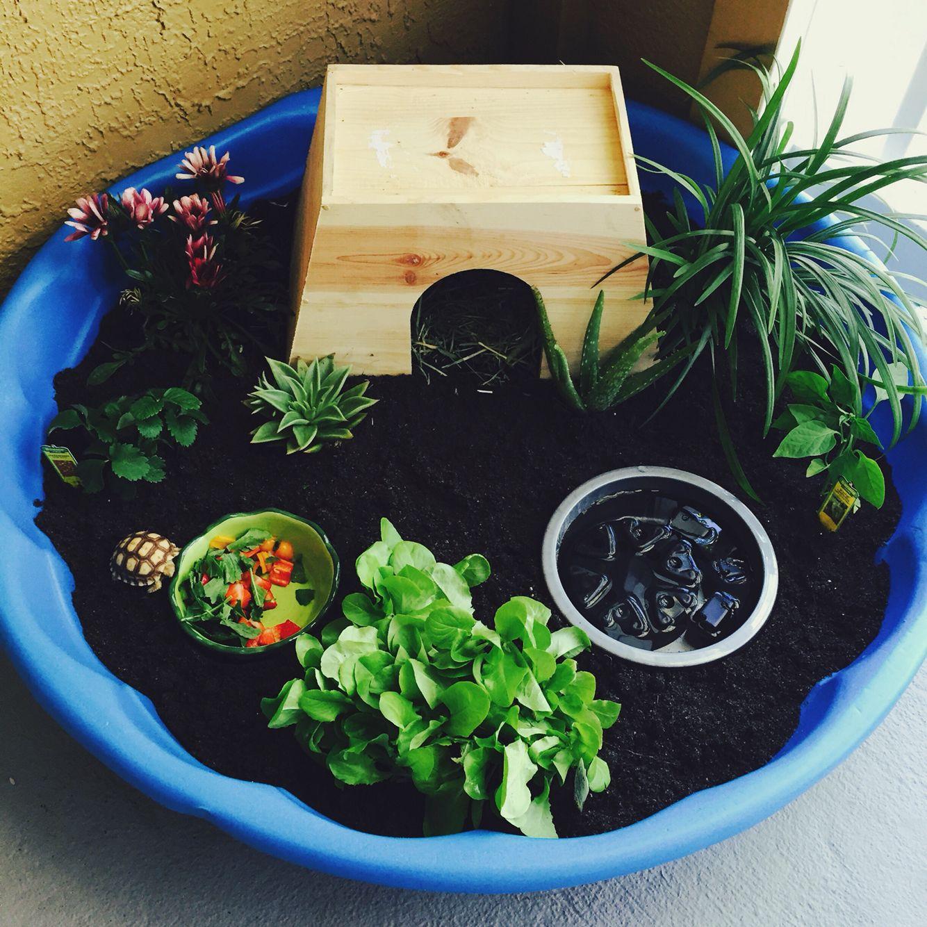 Best 25 Turtle Homes Ideas On Pinterest Information