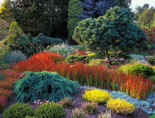 graminacee ornamentali perenni in mix perfette per