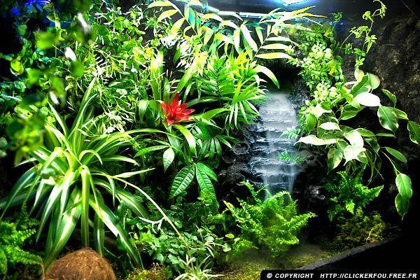 building a large tropical vivarium google search enclosure. Black Bedroom Furniture Sets. Home Design Ideas