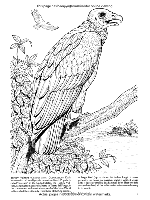 830bf832284eaae26f2351ad2193c7a0 including the art of nature coloring book 60 illustrations inspired by on the art of nature coloring book uk additionally birds of prey coloring book dover nature coloring book amazon on the art of nature coloring book uk besides redoute roses colouring book dover nature coloring book amazon on the art of nature coloring book uk as well as birds of prey coloring book dover nature coloring book amazon on the art of nature coloring book uk