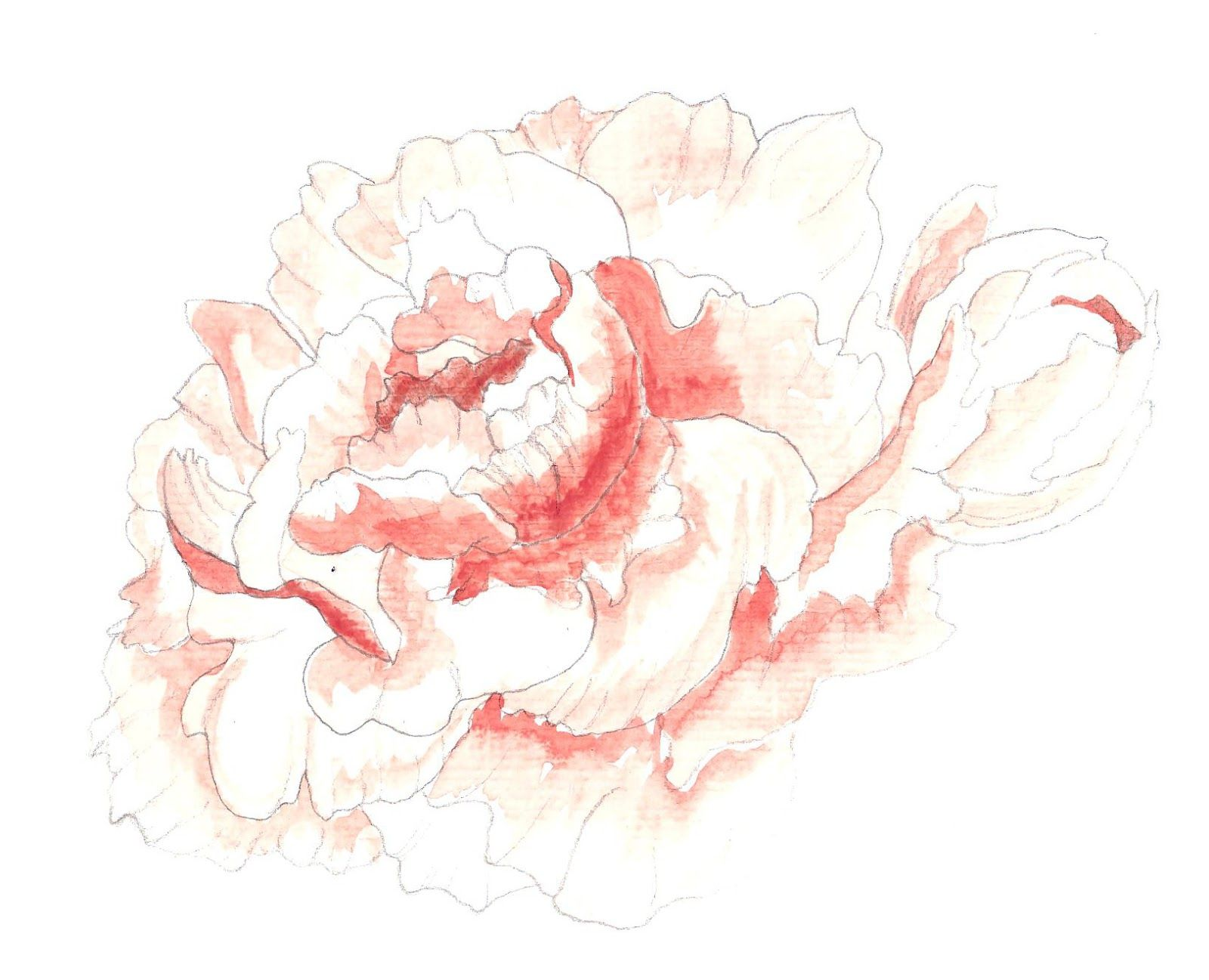 2020 other images peony drawing tutorial