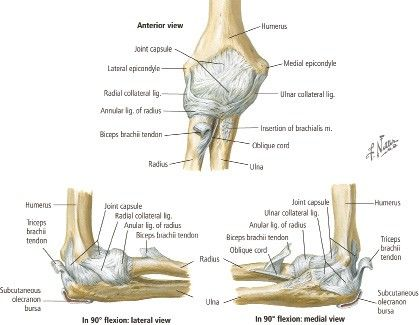elbow ligaments | Orthopedic Study | Pinterest | Physical ...