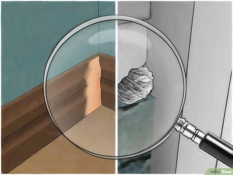 Get rid of mice naturally getting rid of mice how to
