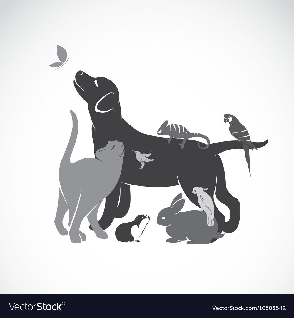 Group Of Pets Royalty Free Vector Image Vectorstock Sponsored Royalty Pets Group Fre Animal Line Drawings Veterinarian Tattoo Pet Sitting Business