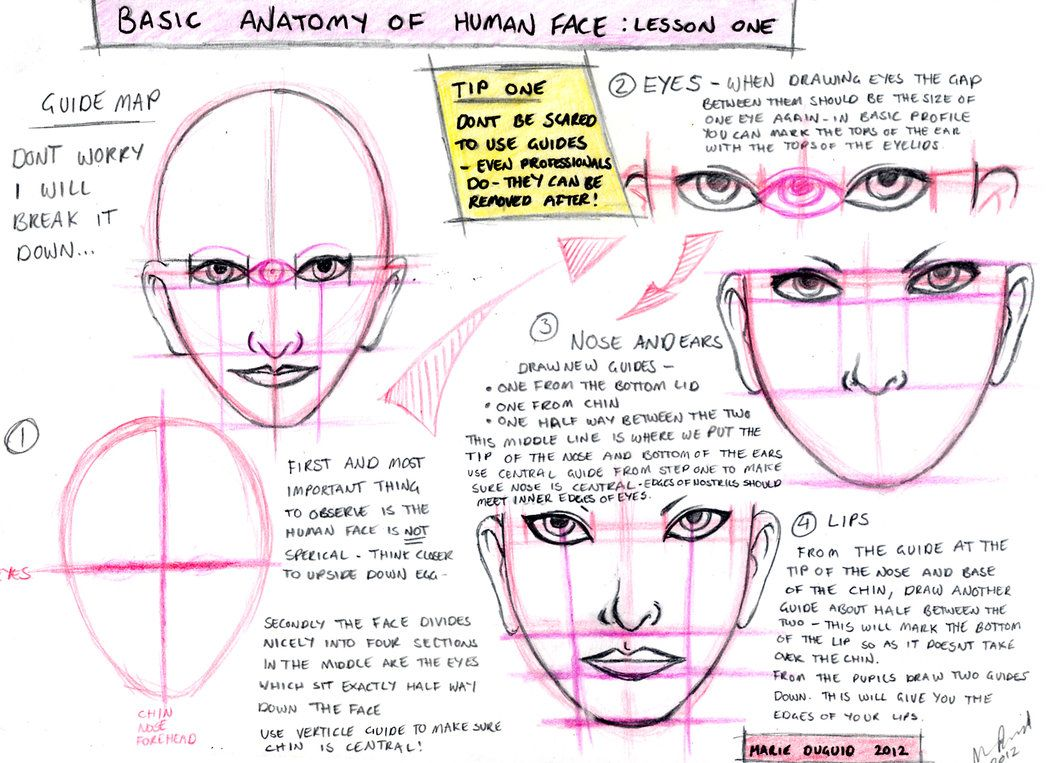 Tutorial: Basic anatomy of the face by Diableret on DeviantArt ...