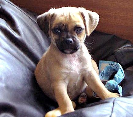 Mojo The Jug What Is A Jug Really Like Jug Dog I Love Dogs Dog Smells