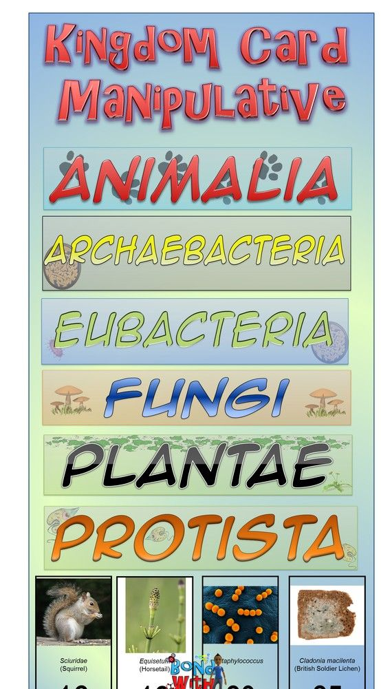 Biology Kingdoms Chart
