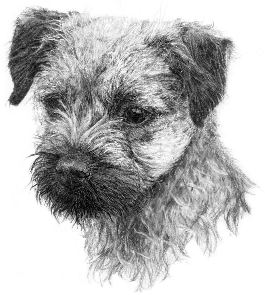 Image Result For Graphite Drawing Dog Border Terrier Cat And Dog