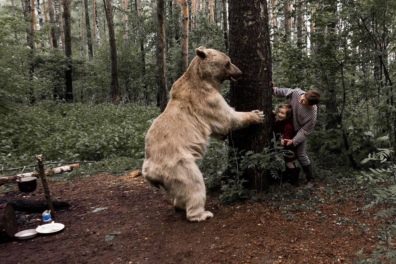 человек смотрит на медведя картинки как помощью фольги
