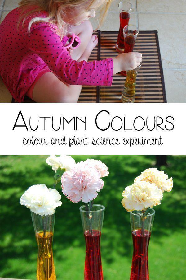 Autumn Colours Plant Science for Preschoolers - #playfulpreschool #autumncolours