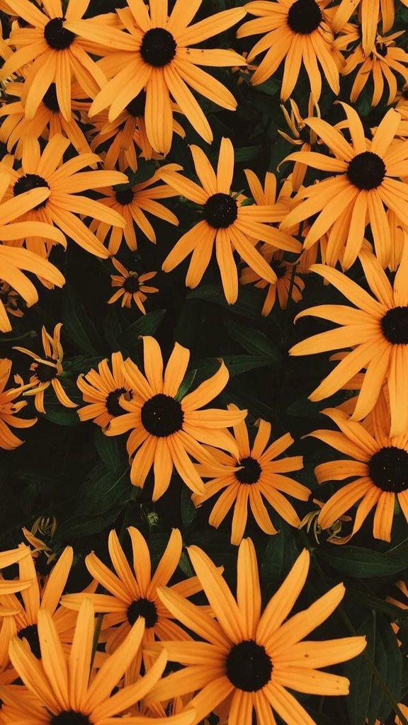 Sunflowers. Yellow Theme.