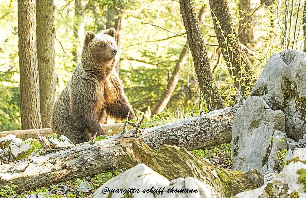 bear... by Margitta Thomann on 500px