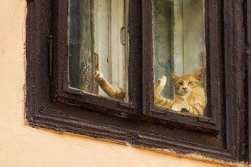 cat fatigue