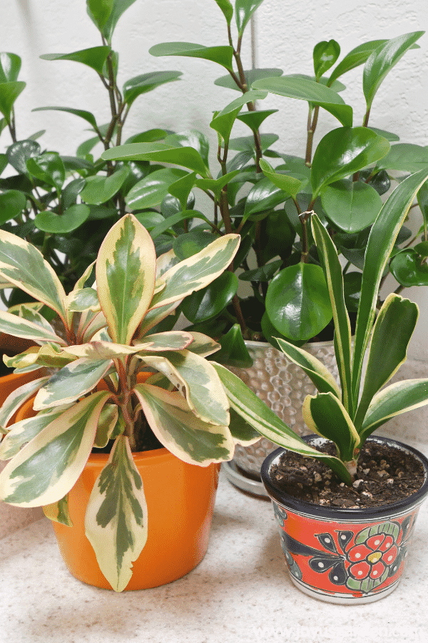 10 Stores Where You Can Buy Indoor Plants Online Buy