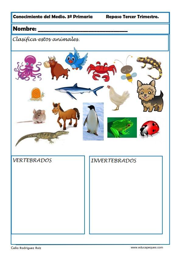 Fichas De Sociales Y Naturales Para Primaria Actividad De Clasificación De Animales Vertebrados Fichas De Animales