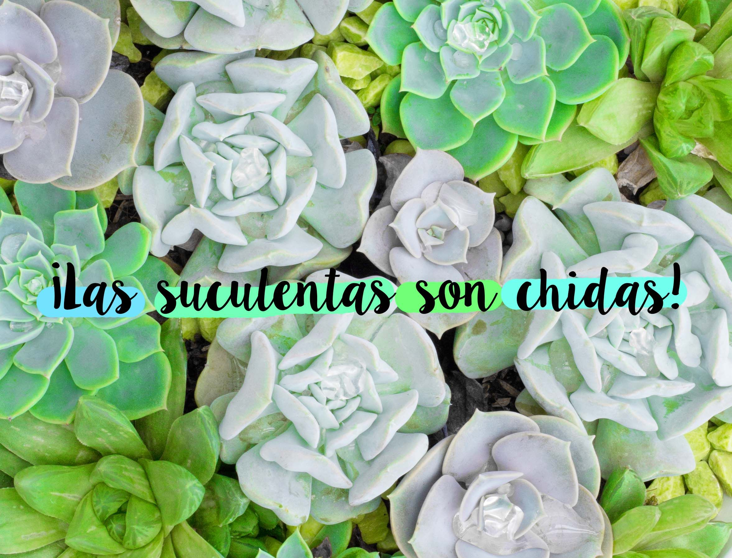 Succulents Are The Ideal No Fuss Plant Requiring Minimal Space