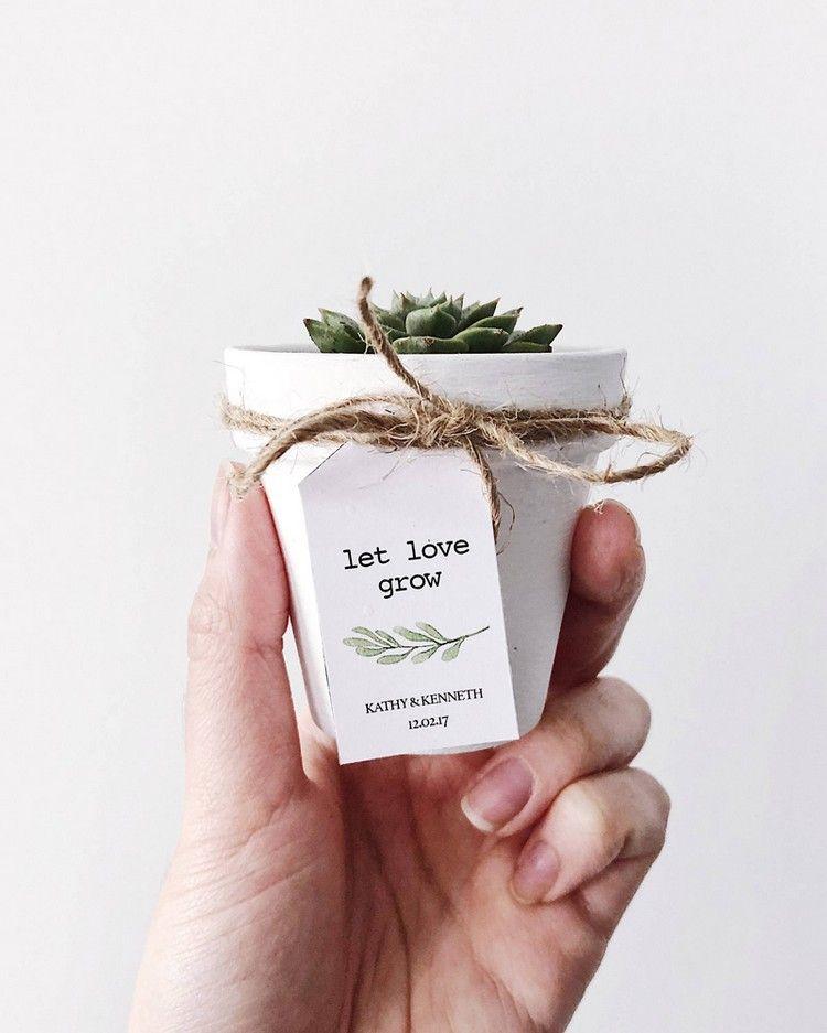Sukkulenten zur Hochzeit – Ideen für originelle Gastgeschenke – Neu Besten